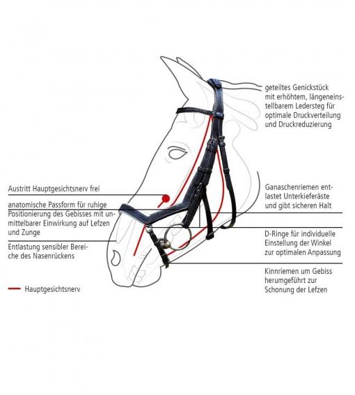 Busse-Trense-Feeling, Pferdetrense, Trense, Ledertrense, anatomische Trense